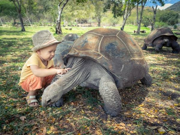Самая умная черепаха. приручение рептилий