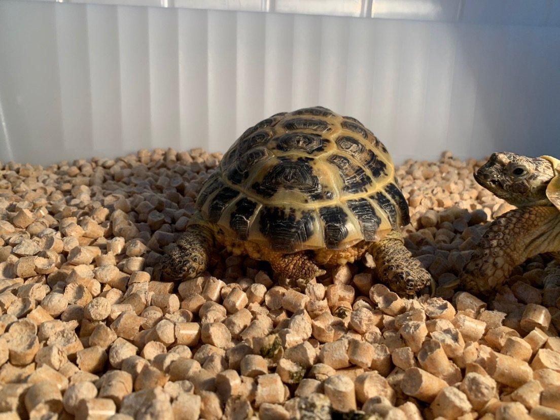 Чем кормить среднеазиатскую черепаху: основная информация по уходу и содержанию