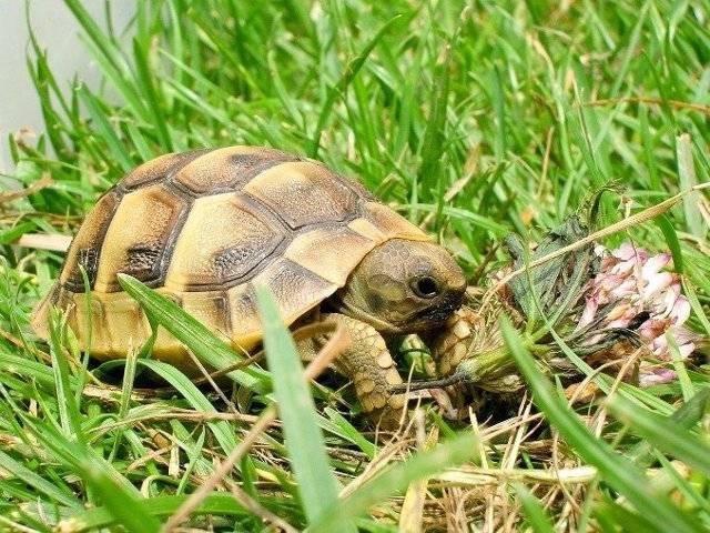 Как приметы отзываются о черепахах: можно ли содержать в доме, если перешла дорогу или сама пришла к вам и другие суеверия как приметы отзываются о черепахах: можно ли содержать в доме, если перешла дорогу или сама пришла к вам и другие суеверия