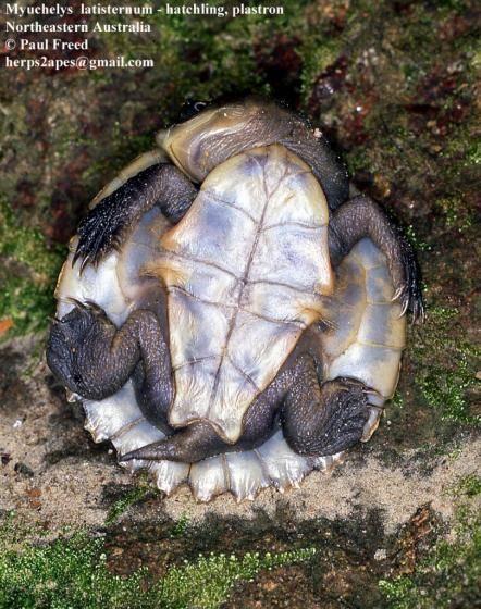Список видов черепах
