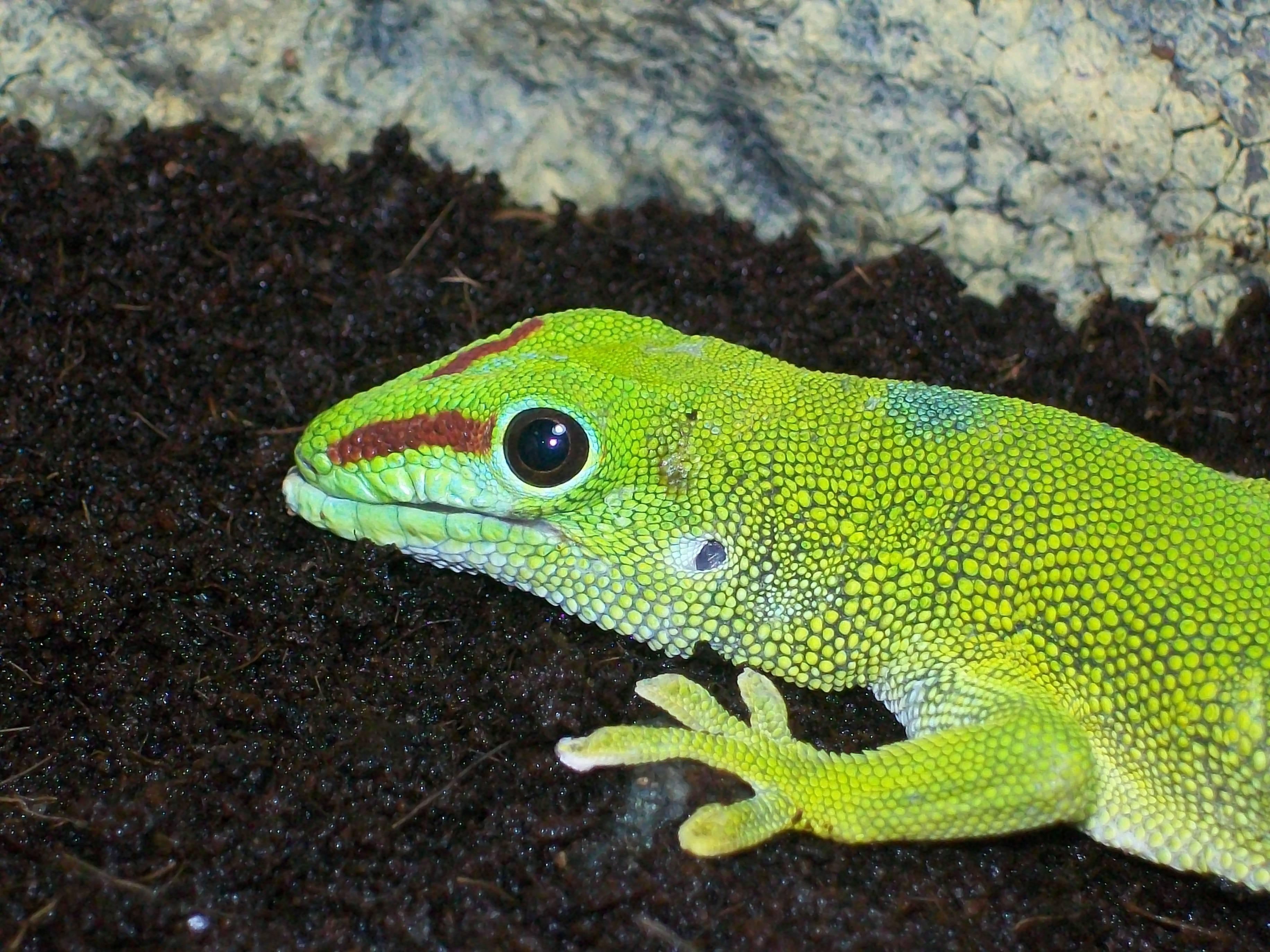 Болезни ящериц | мои домашние питомцы