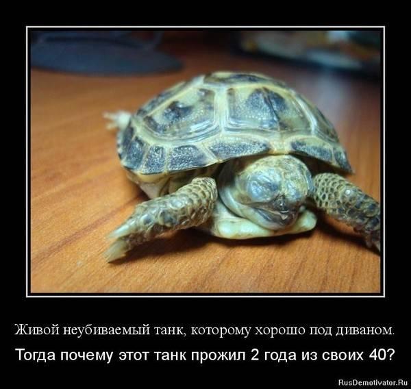 Почему черепаха не ест - что делать, сколько может не есть черепаха?