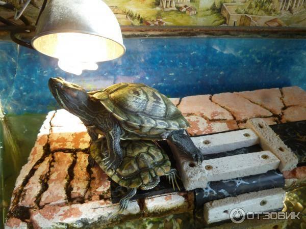 Какая ультрафиолетовая лампа нужна для сухопутной черепахи