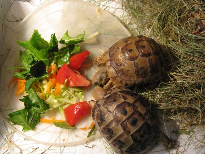 Вызов ветеринарного врача-ихтиолога для лечения рыб или черепах на дом в городе люберцы московской области