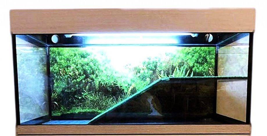 Аквариум для черепах (46 фото): выбираем аквариум для красноухой черепашки. какой должна быть температура воды? как обустроить аквариум для сухопутной и водной черепах?