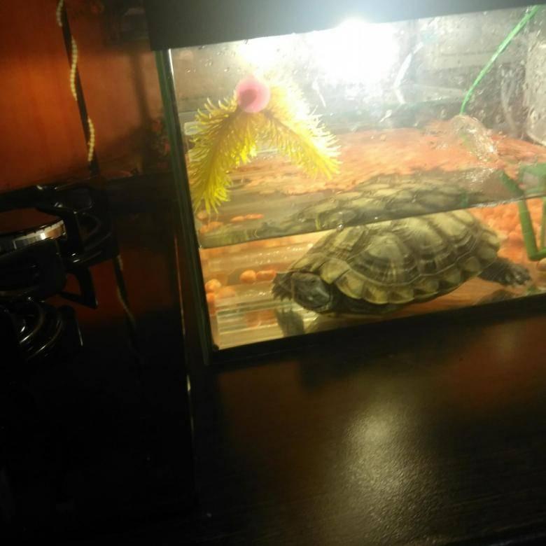 Заболевания красноухих черепах: профилактика,лечение,симптомы,фото,видео.