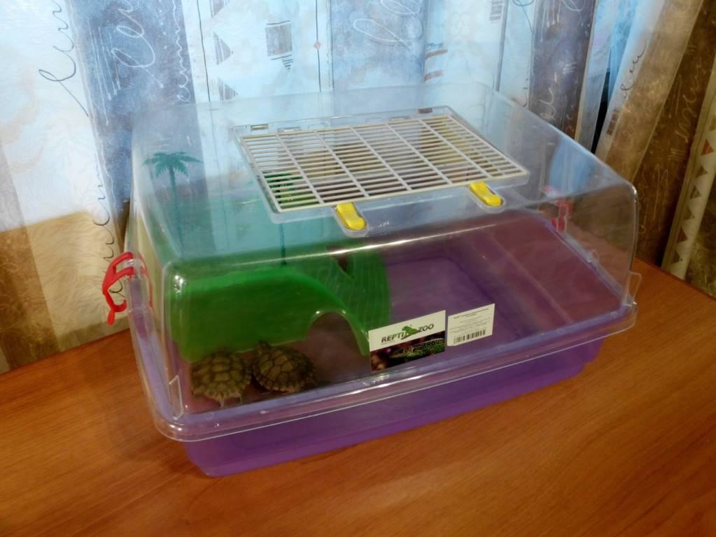 Как перевозить черепаху? простые правила перевозки1 min read