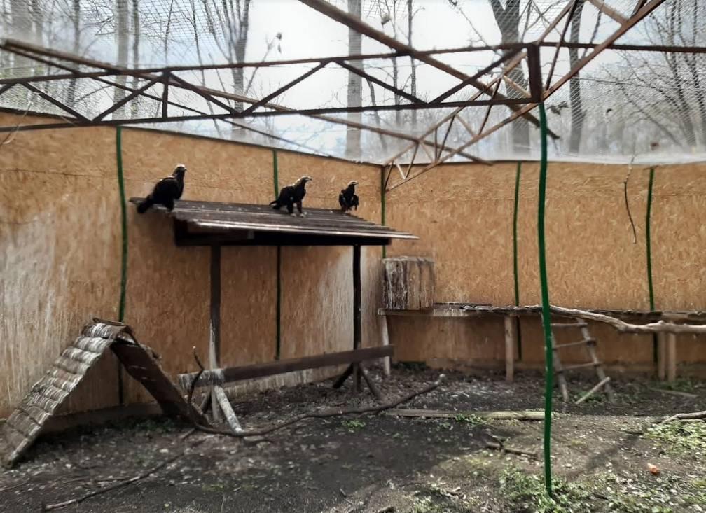 Американское общество по предотвращению жестокого обращения с животными - american society for the prevention of cruelty to animals - qwe.wiki