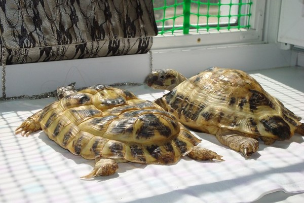 Болезни красноухих черепах их лечение и симптомы