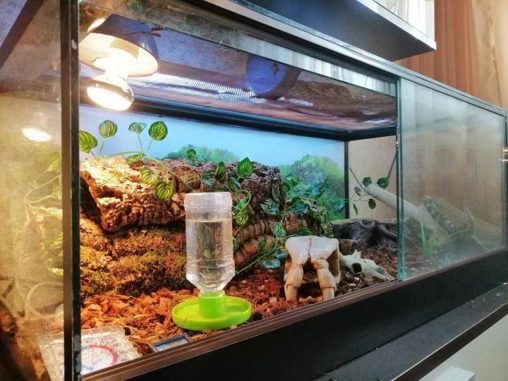 Террариум для черепах: виды,устройство,фото,видео.