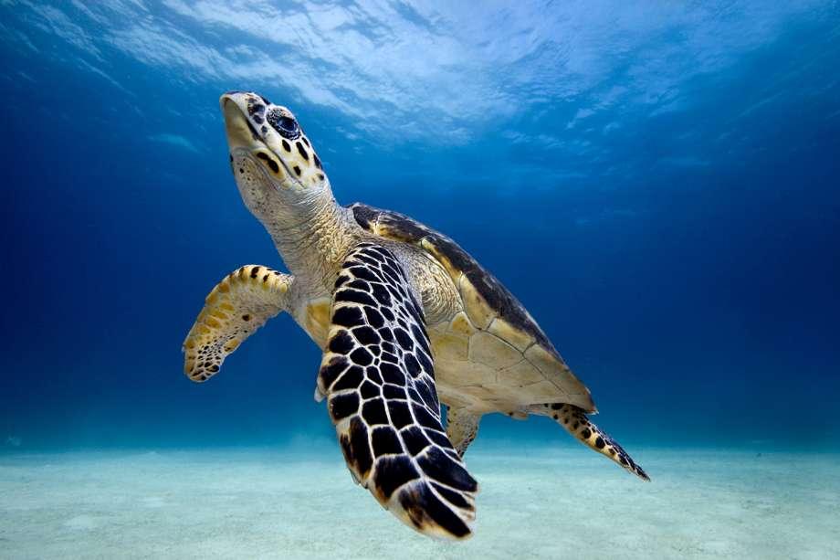 Черепахи морские