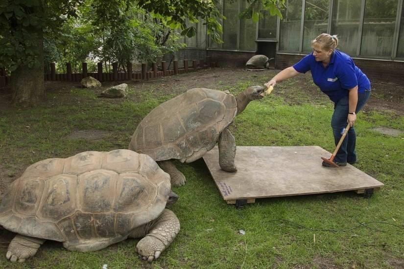 Вес черепахи и его измерение