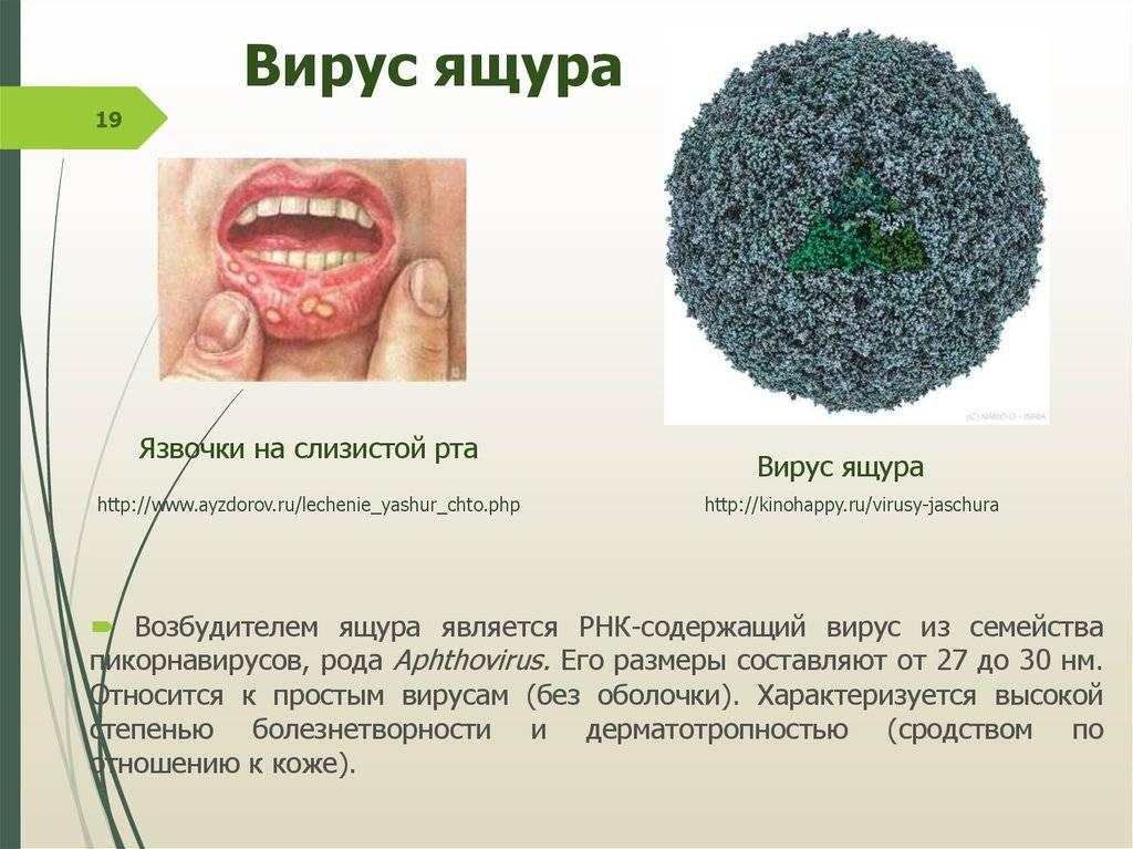 Болезни, вызываемые днк-содержащими вирусами., герпесвирусы - вирусные болезни рептилий
