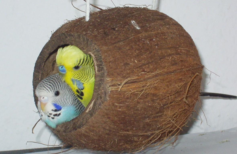 Домик для волнистых попугаев: правильные размеры и как сделать
