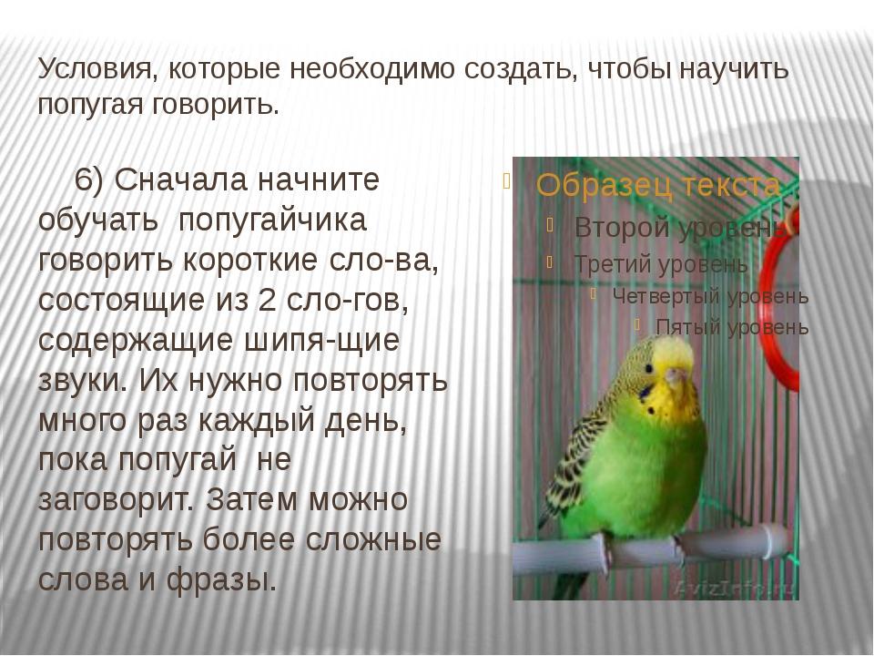 Работающие советы как научить разговаривать волнистого попугая мальчика и девочку
