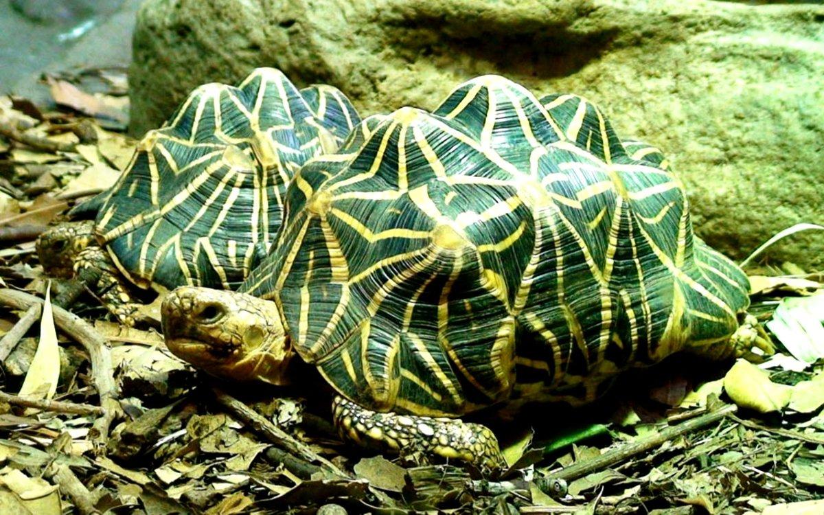 Домашние черепахи: какие бывают виды сухопутных и морских рептилий для содержания дома