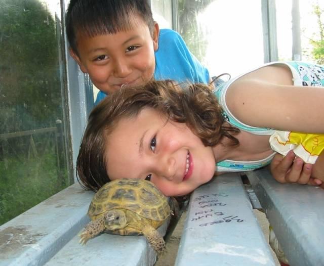 Как ухаживать за сухопутной черепахой в домашних условиях - оборудование террариаума, кормление, уход за панцирем