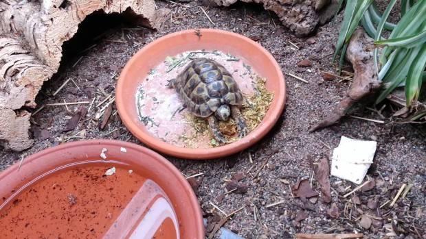 Чем кормить красноухую черепаху - что можно давать, а что нельзя?