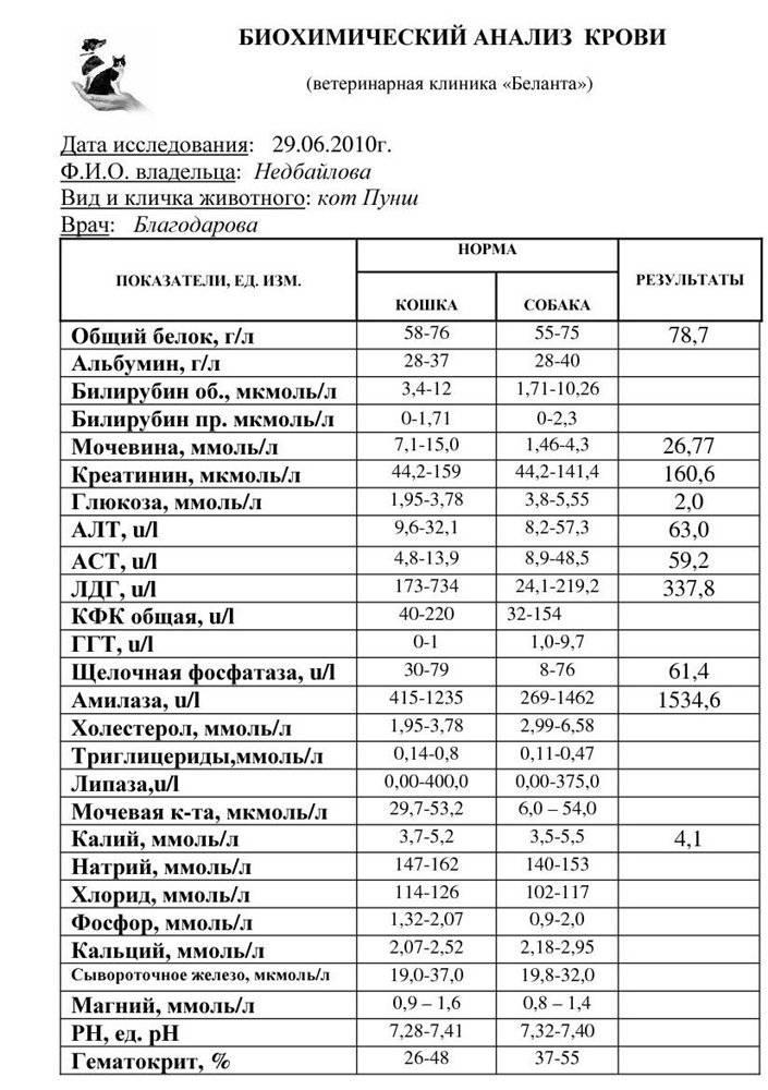 Биохимический анализ крови животных
