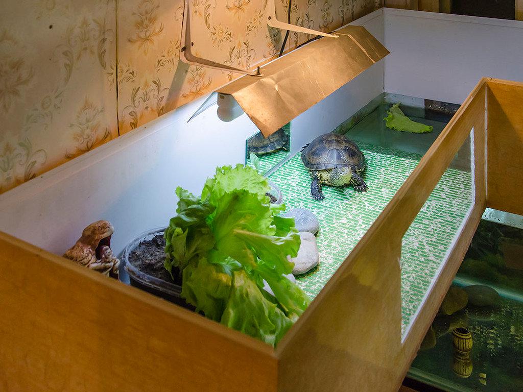 Вызов ветеринарного врача-ихтиолога для лечения рыб или черепах на дом в городе видное московской области