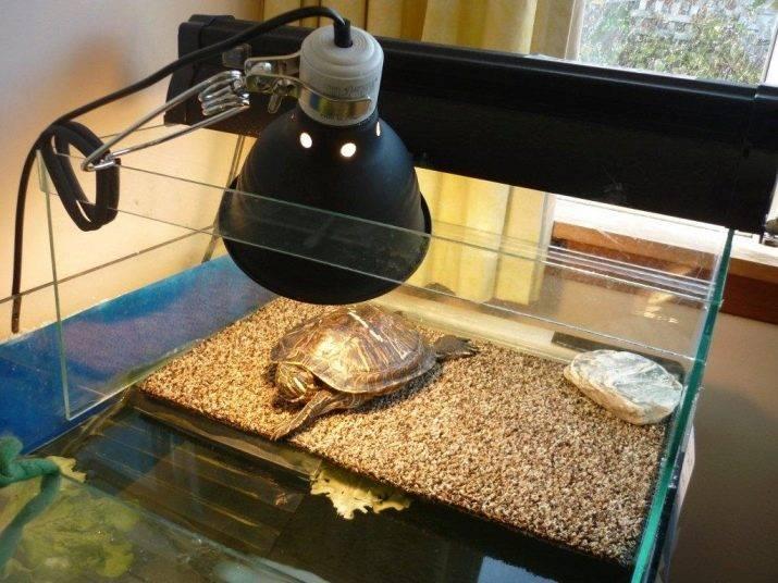 Среднеазиатская черепаха - как содержать и ухаживать за ней дома?