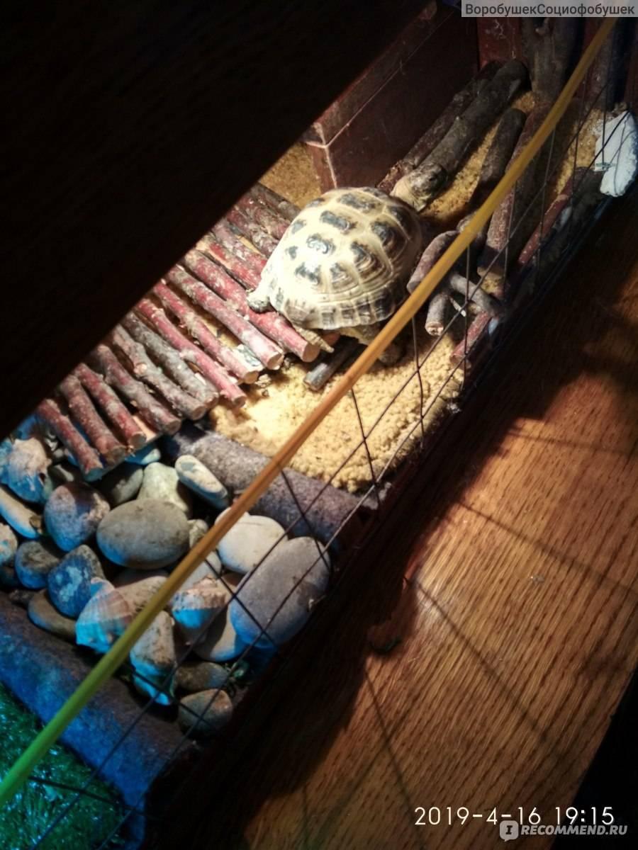 Средиземноморская черепаха - биология в вопросах и ответах