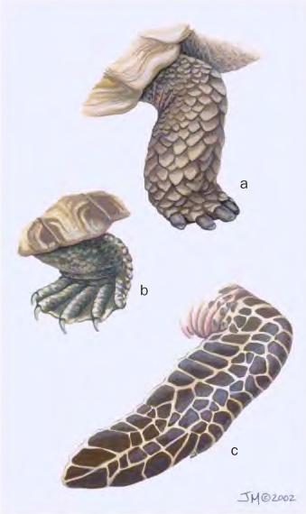 Класс рептилии (пресмыкающиеся) - биология егэ