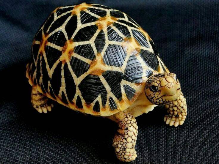 Сайт священника алексея шляпина - морские черепахи
