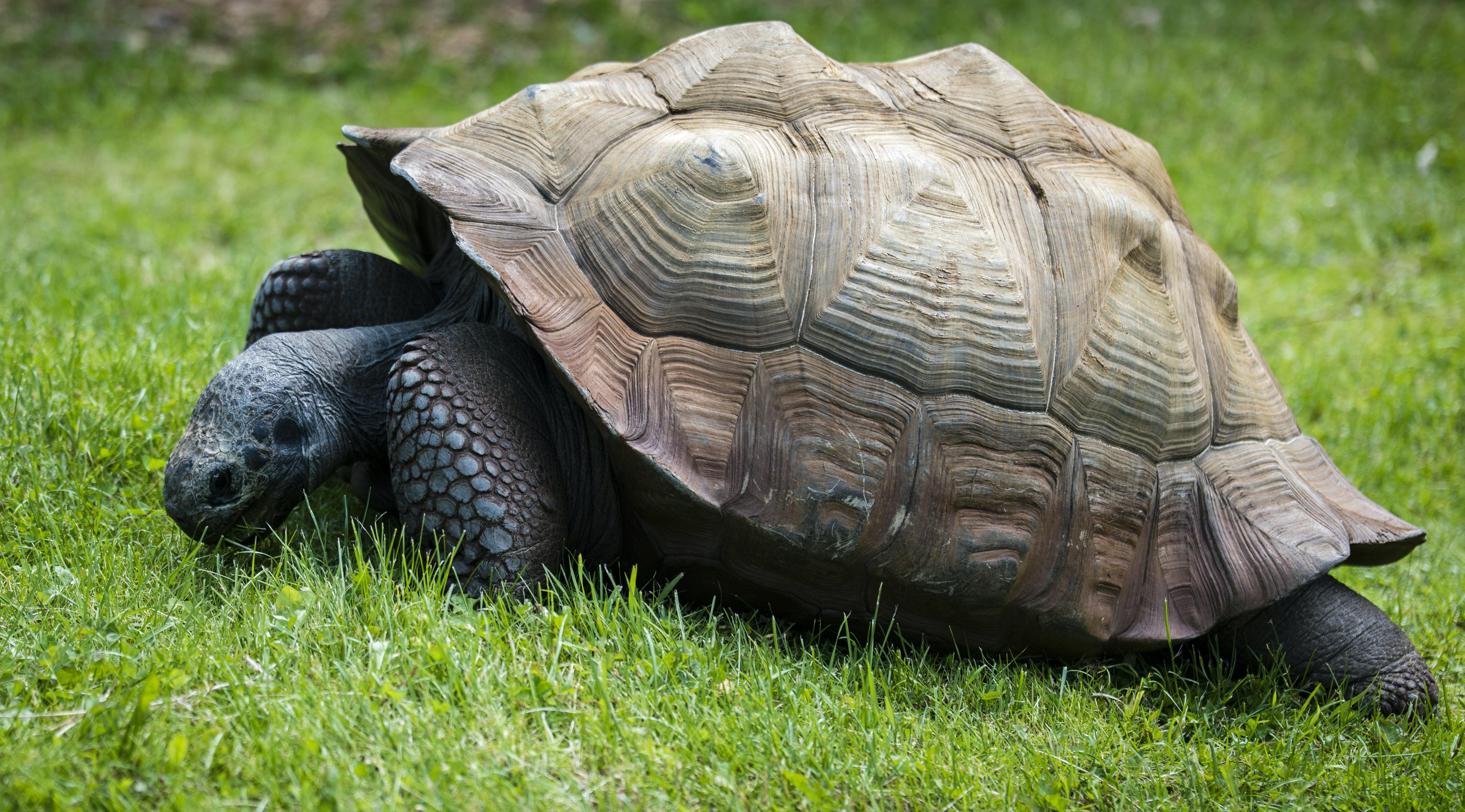 Черепахи грея уолтера: в поисках искусственной жизни