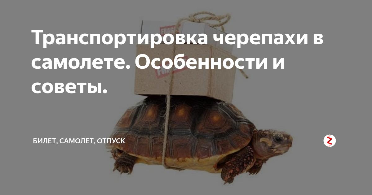 Как перевезти красноухую черепаху в самолете и можно ли это делать