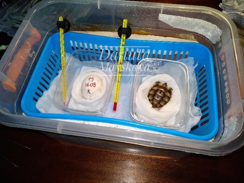 Как правильно пользоваться инкубатором для яиц в домашних условиях