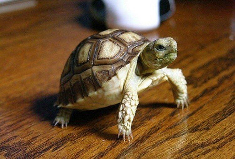 Аллергия на черепах симптомы