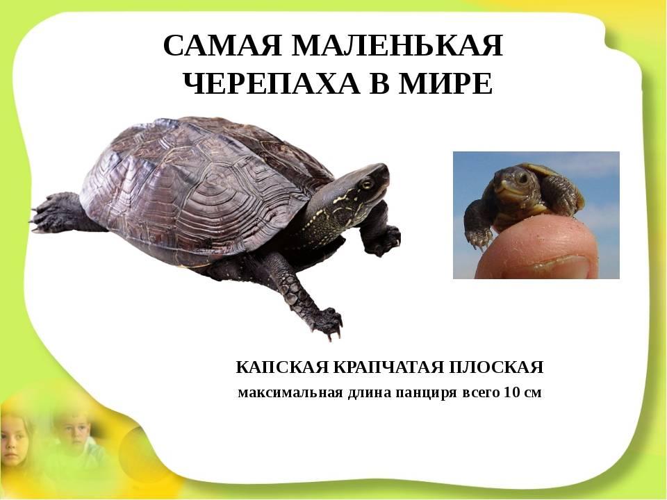 8 самых больших черепах