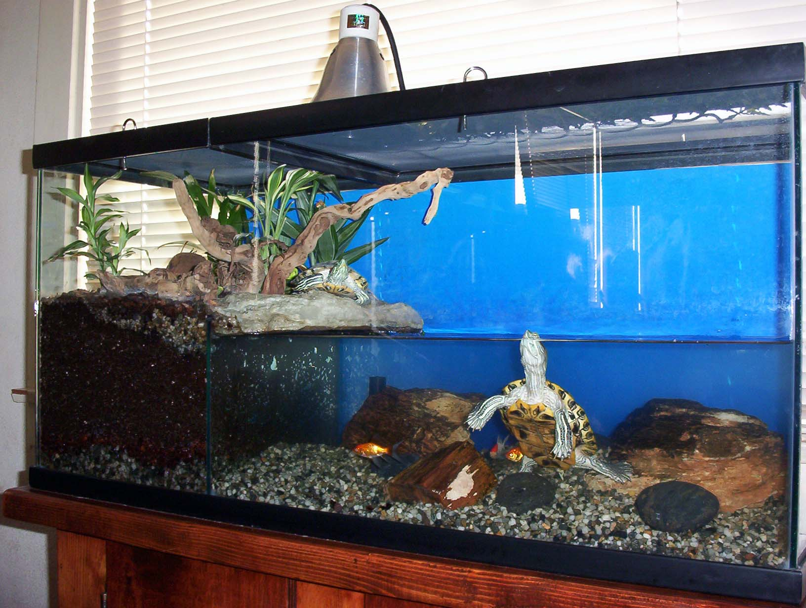 Среднеазиатская черепаха - содержание и уход в домашних условиях