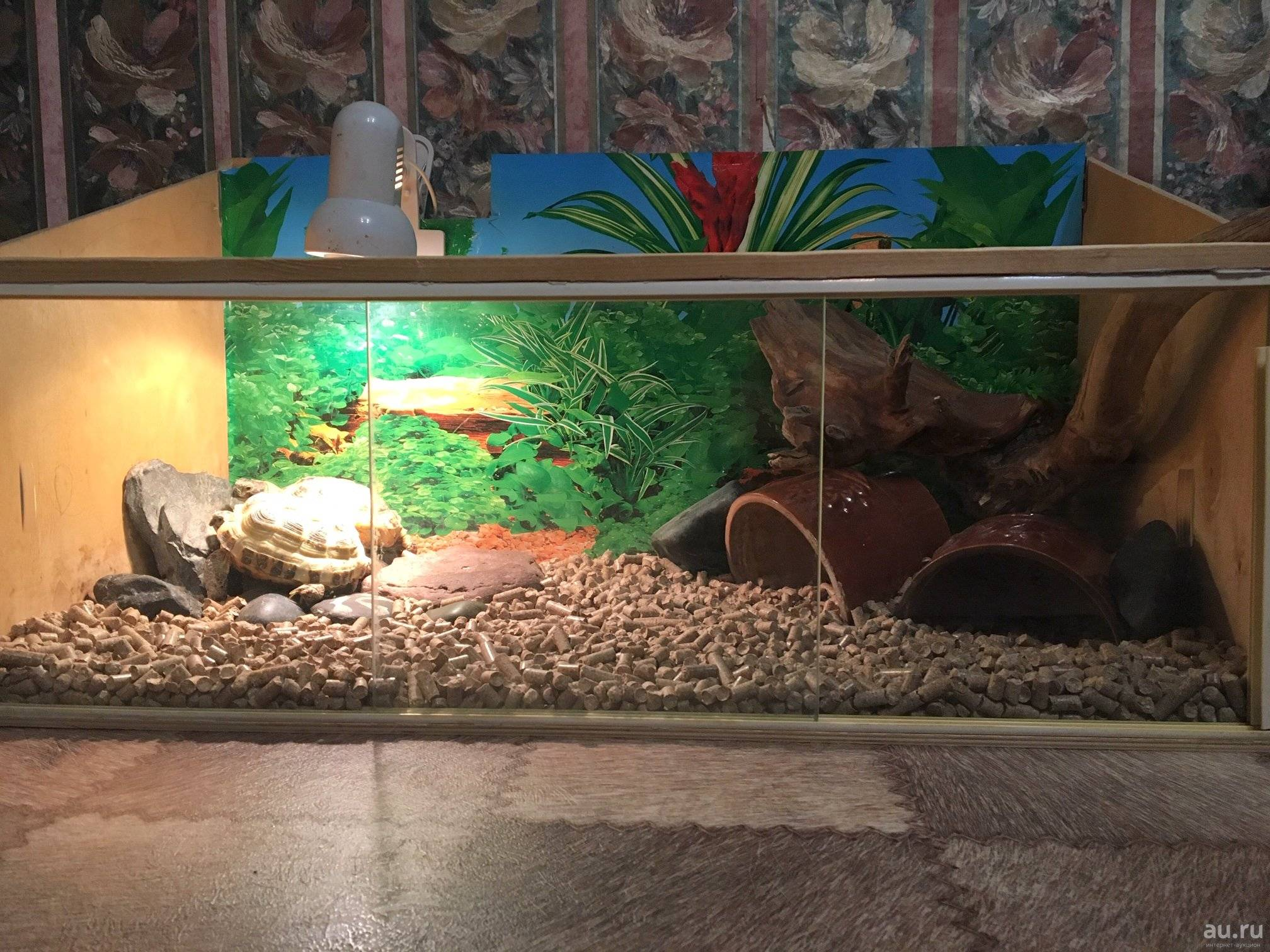 Террариум для сухопутной черепахи своими руками