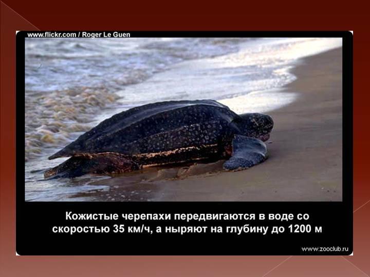 Мифы, ошибки и заблуждения о черепахах