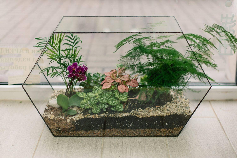 Палюдариум: пошаговая инструкция по изготовлению своими руками, выбор растений и животных