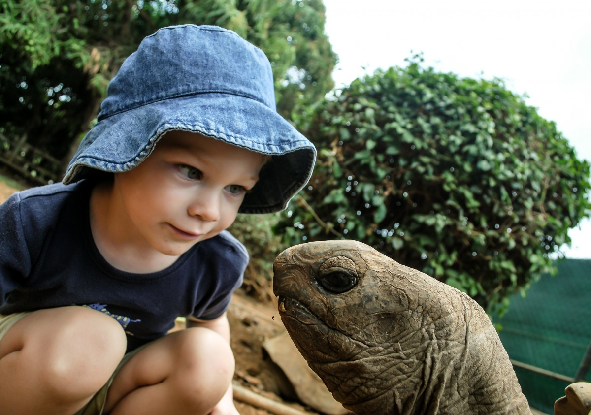 Сонник приручить черепаху. к чему снится приручить черепаху видеть во сне - сонник дома солнца. страница 6