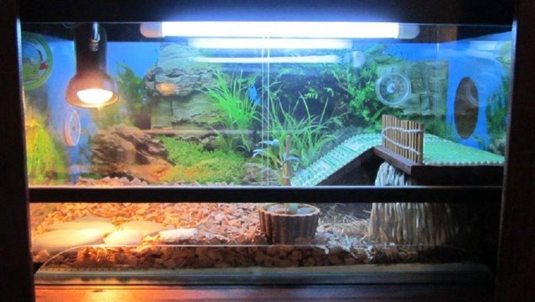 Ультрафиолетовая лампа для черепахи
