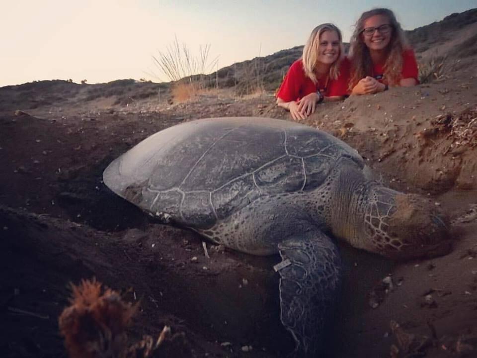 На кипре сезон размножения черепах.