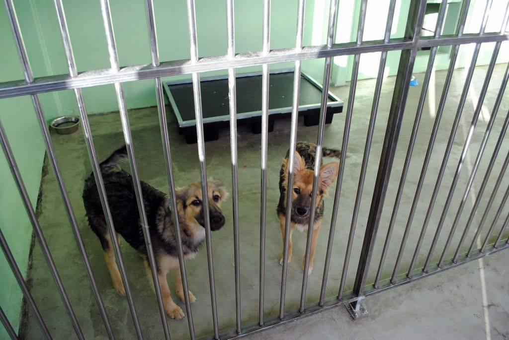 Американское общество по предотвращению жестокого обращения с животными - american society for the prevention of cruelty to animals