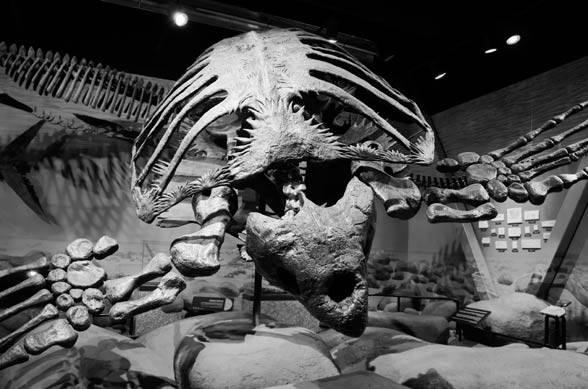 Архелон | гигантская морская черепаха