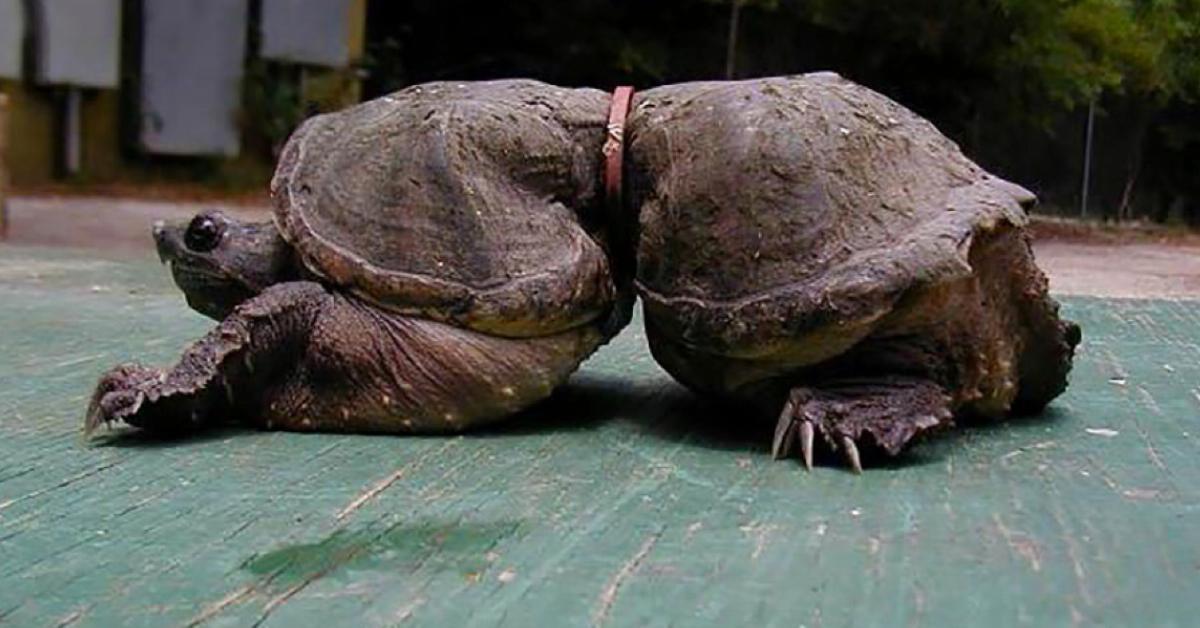 Черепаха ничего не ест. причины и последствия