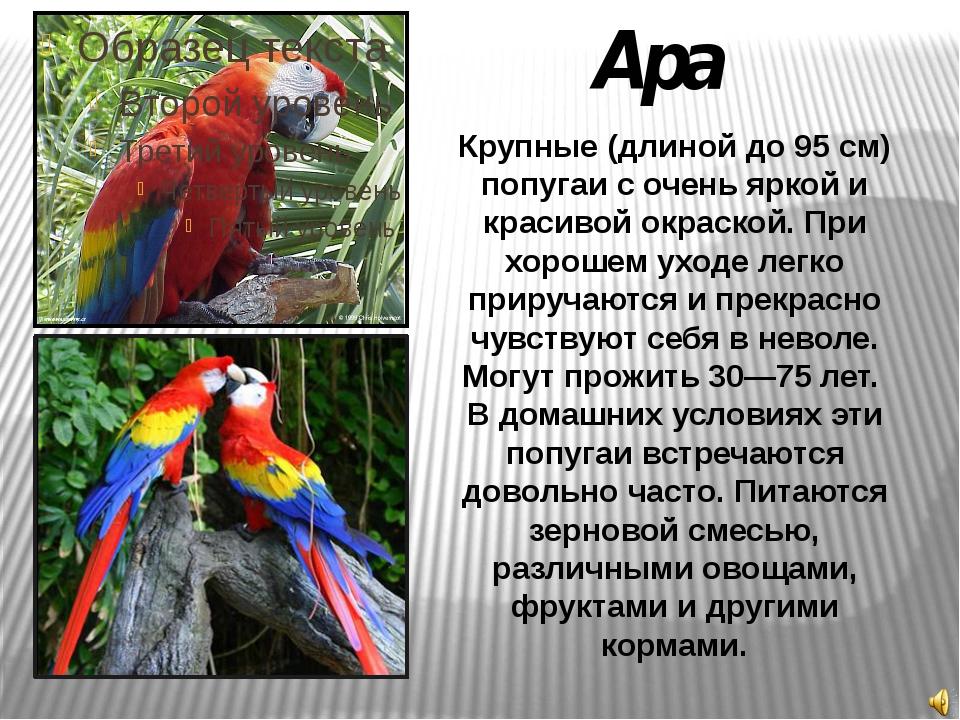 Интересные факты о попугаях