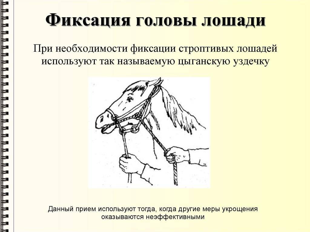 Способ фиксации животного в стереотаксическом аппарате советский патент 1982 года по мпк a61b19/00