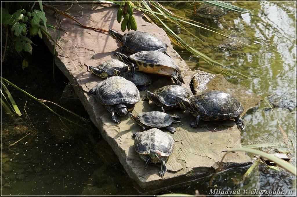 Закинф — остров черепах и голубых пещер