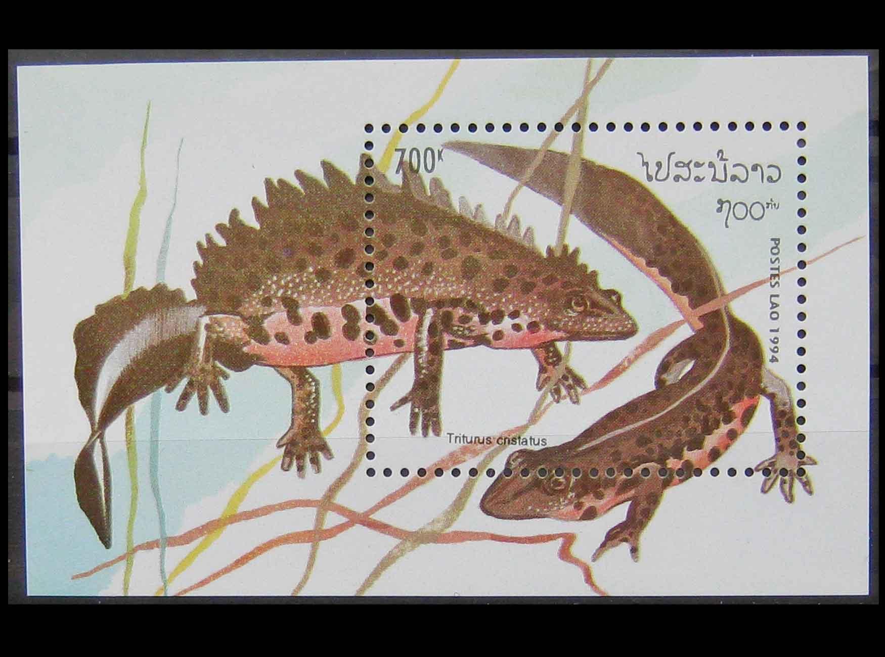 Древние рептилии и амфибии. динозавры