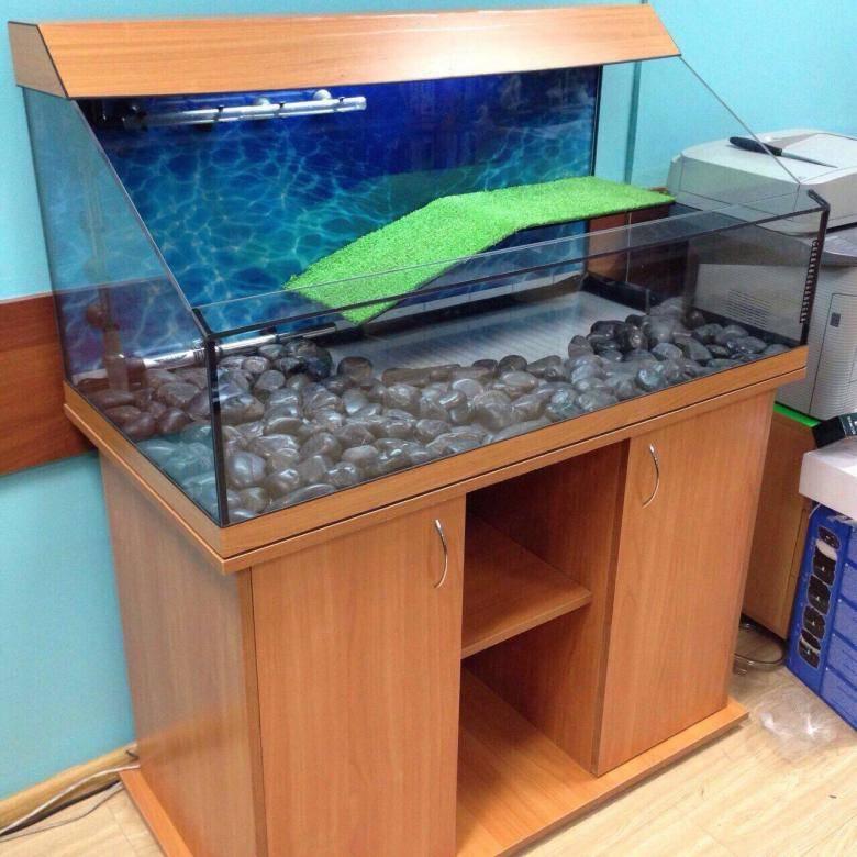 Как оборудовать аквариум для красноухой черепахи
