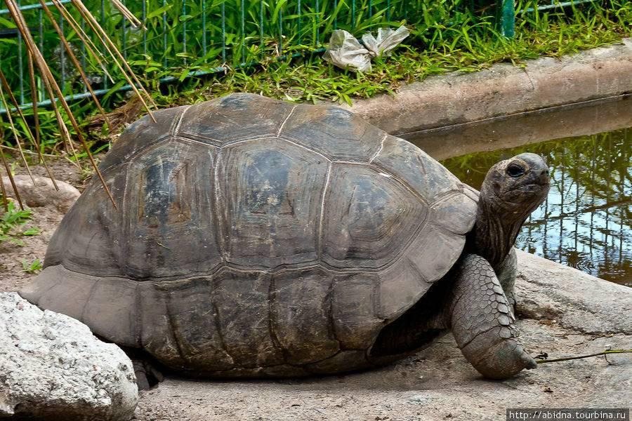 Гигантская черепаха — википедия с видео // wiki 2