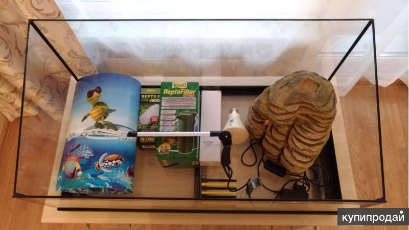Вызов ветеринарного врача-ихтиолога для лечения рыб или черепах на дом в городе щёлково московской области